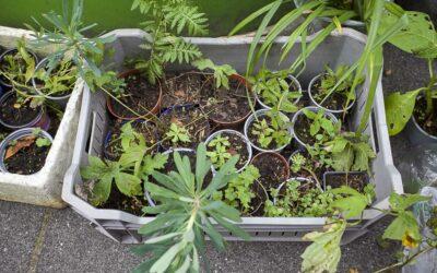 Planten- en zadenruilbeurs